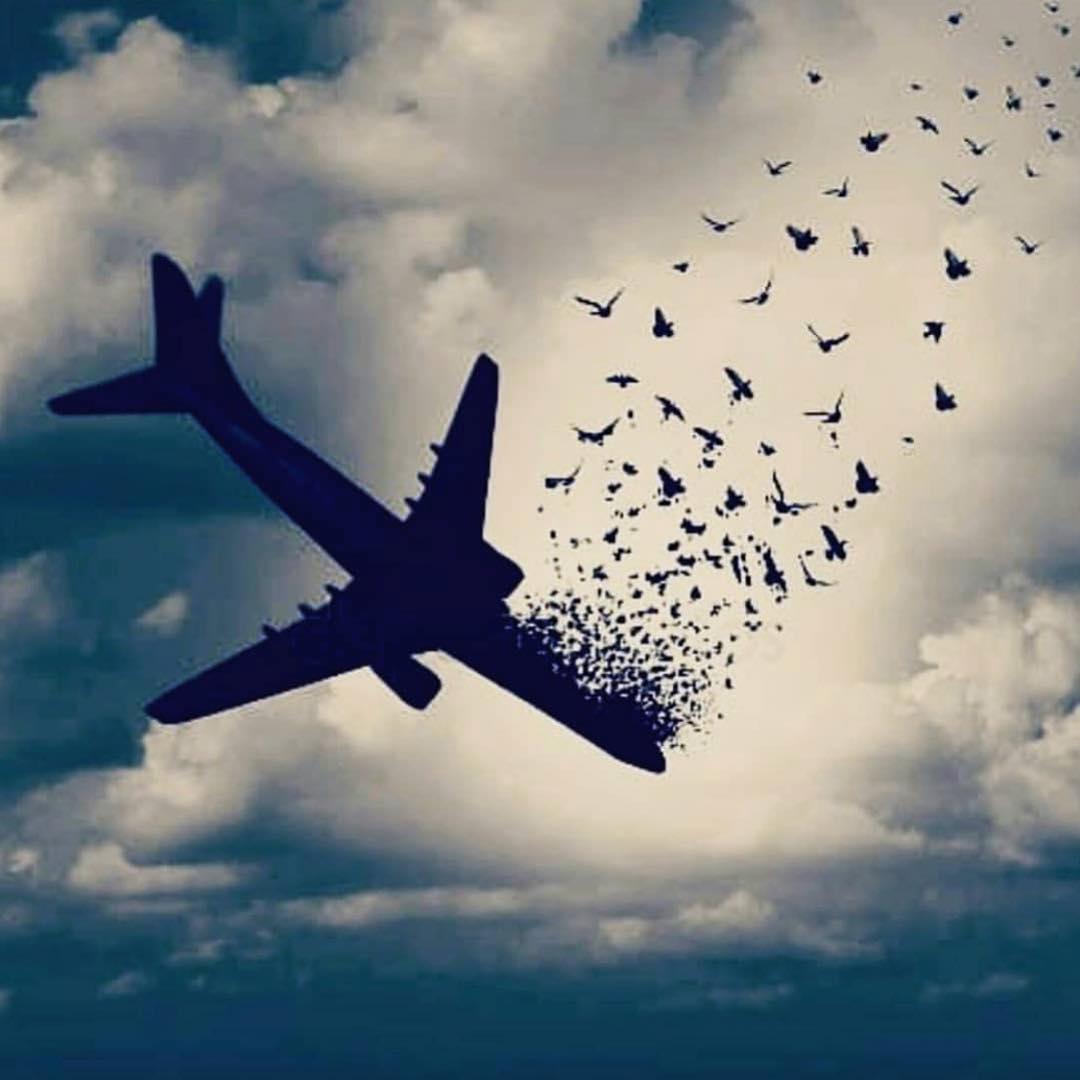 واکنش هنرمندان به سقوط هواپیمای مسافربری تهران-یاسوج